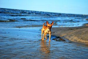 Морской пес